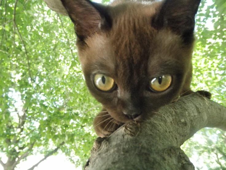 Coolest looking cat ever! | Creatures | Pinterest