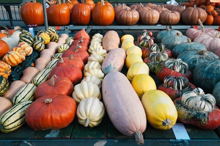 The Circleville Pumpkin Show   Thought & Sight