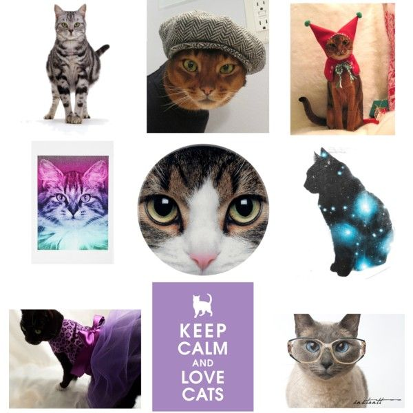 """""""Every Cat Has a Story"""" by sarah-siegel on Polyvore"""