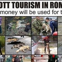 All Romanian Authorities, Romania Tourism . Romanian Media: STOP the extermination of stray dogs and Police brutality in Romania . Until then we will avoid Romania and Romanian products!! SHARE AND SIGN!!!