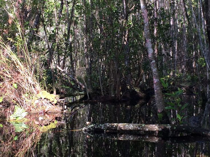 Tibet Butler Nature Preserve Orlando FL USA #hiking #camping #outdoors #nature #travel #backpacking #adventure #marmot #outdoor #mountains #photography