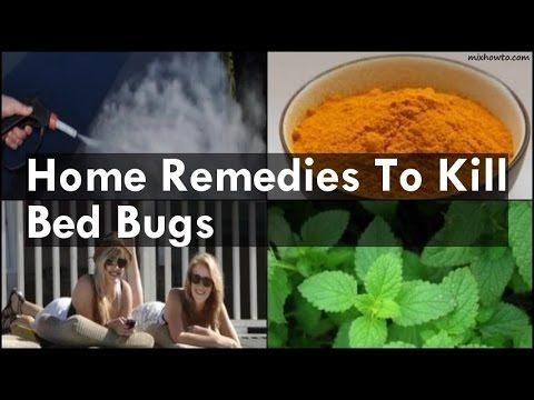 How to Kill Bed Bugs FAST | Best Advice on Killing Bed Bugs Yourself | Natural Pest Control Tips - YouTube