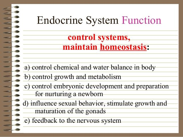 Endocrine System: a collection of ideas to try about Other ...