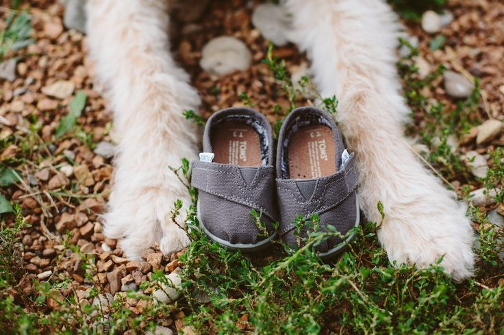 Unique baby announcement photo with dog and toms