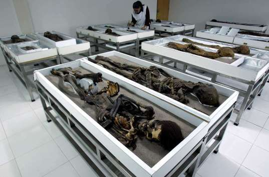 Chinchorro mummies are seen inside Azapa's San Miguel Museum in Arica city.