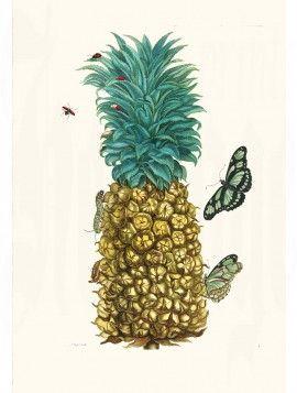Merian Butterfly prints Pineapple