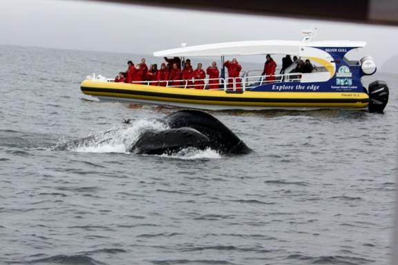 Having a Whale of a time with Tasman Island Cruises, Port Arthur