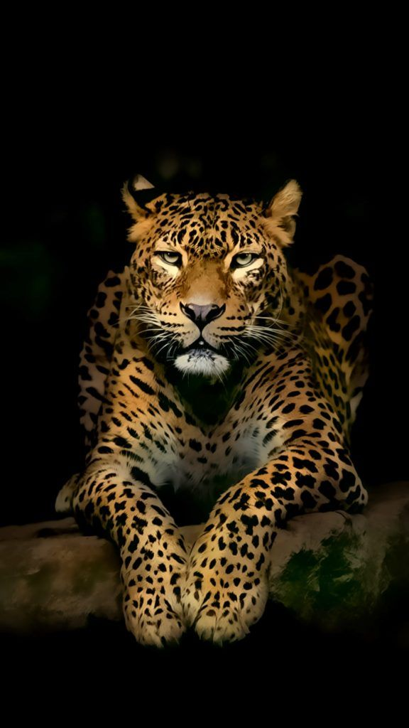 4k Wallpapers For Mobile Phone Lovely Leopard Iphone 4k Jaguar Animal Wild Animal Wallpaper Animals