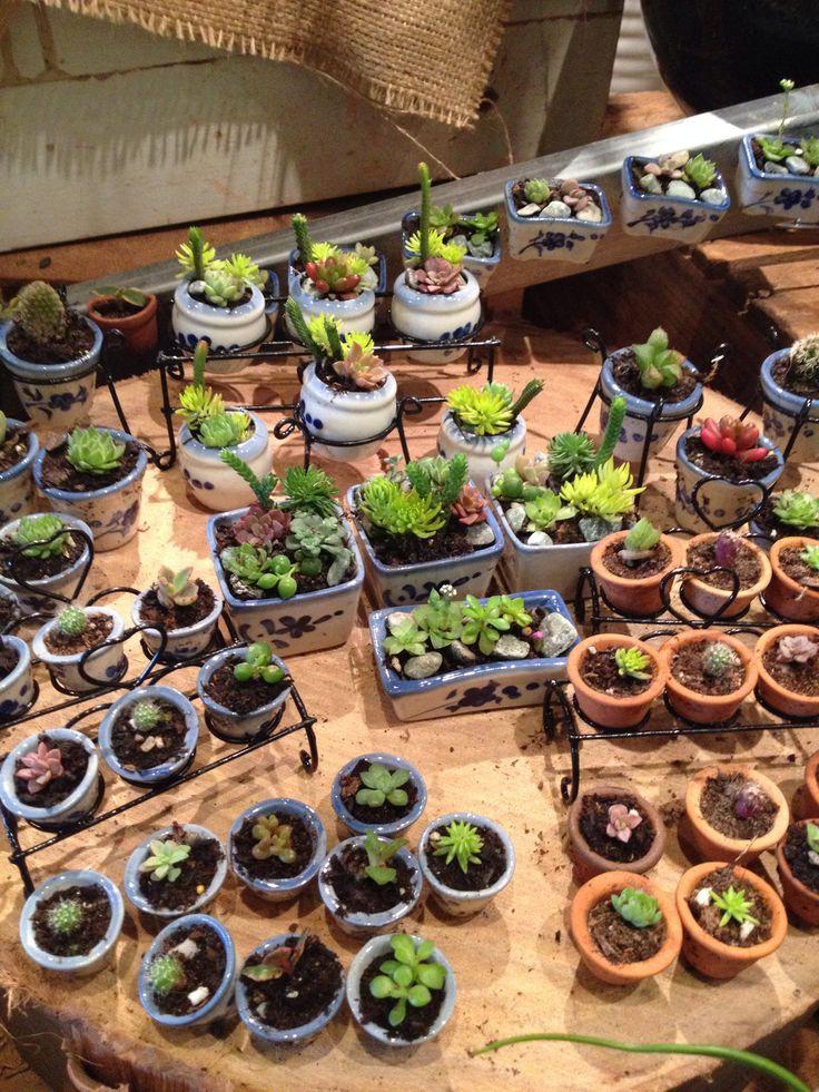 Mini succulents. So cute!!