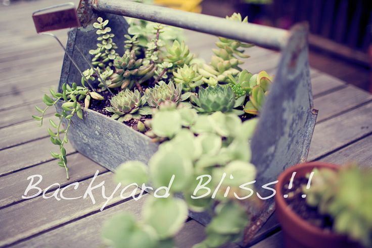 succulents in toolbox for the garden - cool!