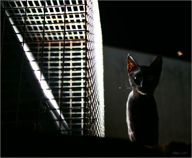 Охотник на мотыльков. Кипр. Пафос #кипр #пафос #кот #в #порту #ночь #тень #черная #фонарь #охотник #на #мотыльков Автор: Darn Cat