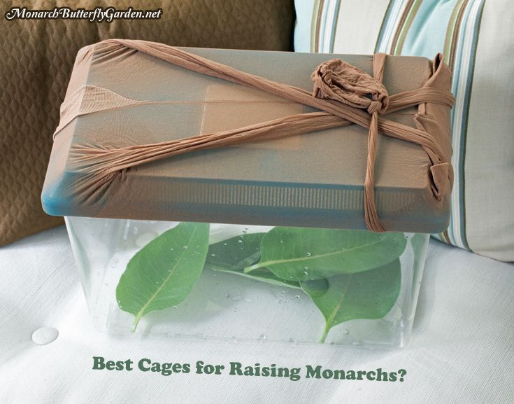 3 Caterpillar Cages for Raising Happy, Healthy Monarch Butterflies...