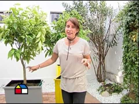 Decoración de Jardines con Piedras Blancas | Diseño y Decoración de Jardines