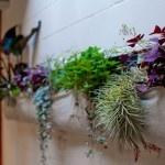 GardeningGardens Ideas, Bathroom Plants, Indoor Gardens, Herbs Garden, Low Lights, Woolly Pocket, Indoor Plants, Wall Planters, Wall Gardens