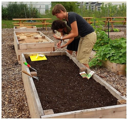 Superbe Community Gardening In Raised Beds.