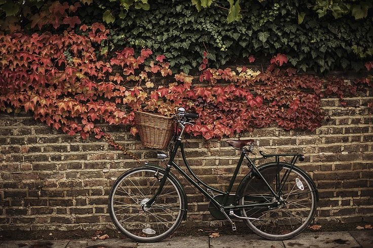 What girls wouldn't want a bike like this? Bicycles Love Girls. http://bicycleslovegirls.tumblr.com/