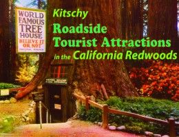 Hwy 101 in Northern California has some great roadside attractions for family fun