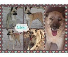 NIKKO BUSCA FAMILIA  #Adopción #adopta #adoptanocompres #adoptar #LealesOrg  Contacto y info: Pulsar la foto o: https://leales.org/animales-en-adopcion/perros-en-adopcion/nikko-busca-familia_i141 ℹ   Nikko es un precioso mestizo macho nacido el01/06/2012 es de tamaño mediano y está castrado. Nikko entró en la perrera hace varios años el pobre era totalmente invisible..y su vida corría peligro. Lo sacamos a residencia.. creíamos que sería algo temporal.. pero ya lleva varios años en la jaula…