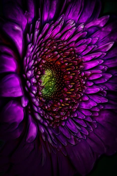 Marvellous  Images About Garden Come And Sit On Pinterest With Magnificent Gerbera Daisy  With Appealing How To Get Rid Of Garden Snails Naturally Also Gardening Express Reviews In Addition Covent Garden Apple Market And Lower Back Pain After Gardening As Well As The Range Garden Furniture Additionally Strikes Garden From Pinterestcom With   Magnificent  Images About Garden Come And Sit On Pinterest With Appealing Gerbera Daisy  And Marvellous How To Get Rid Of Garden Snails Naturally Also Gardening Express Reviews In Addition Covent Garden Apple Market From Pinterestcom