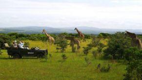 Südafrika Safari Lodge - Kariega
