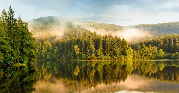 3. In zo'n woud speelt het grootste stuk van verhaal af. Het geeft een spannende sfeer. Ze moeten alles wat ze nodig hebben uit de natuur halen.