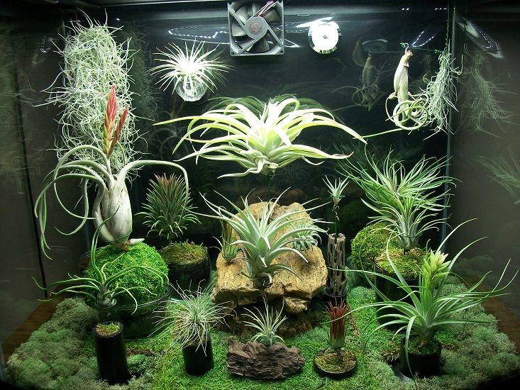 online store aaac2 78861 Pin on garden