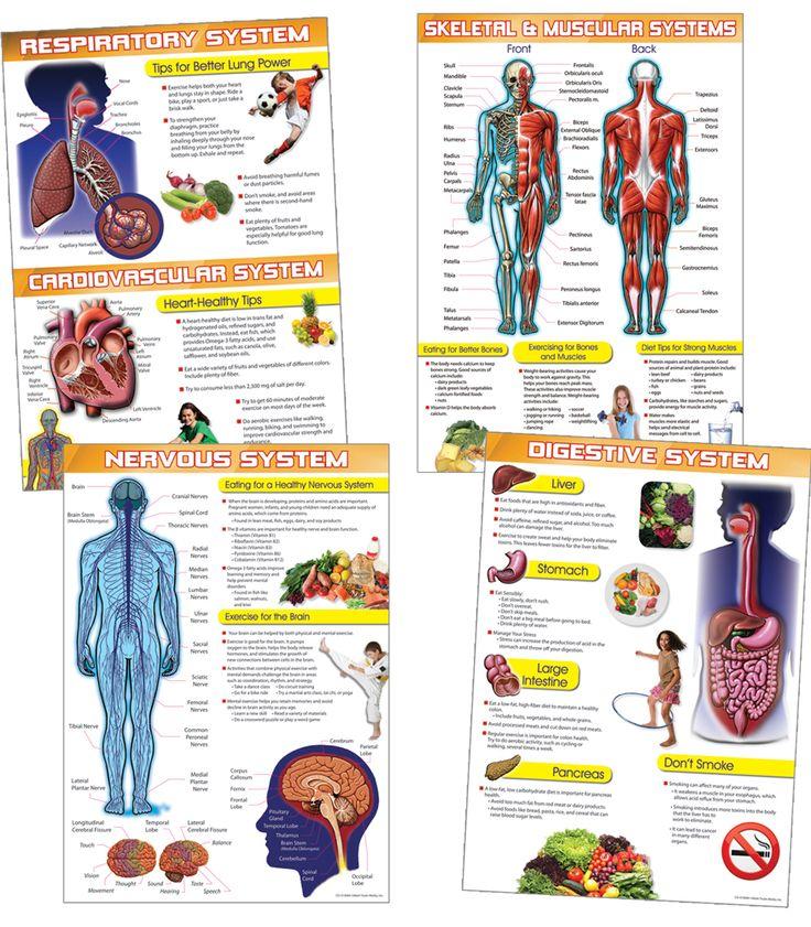 29 best skeletal system for kids images on pinterest | teaching, Muscles