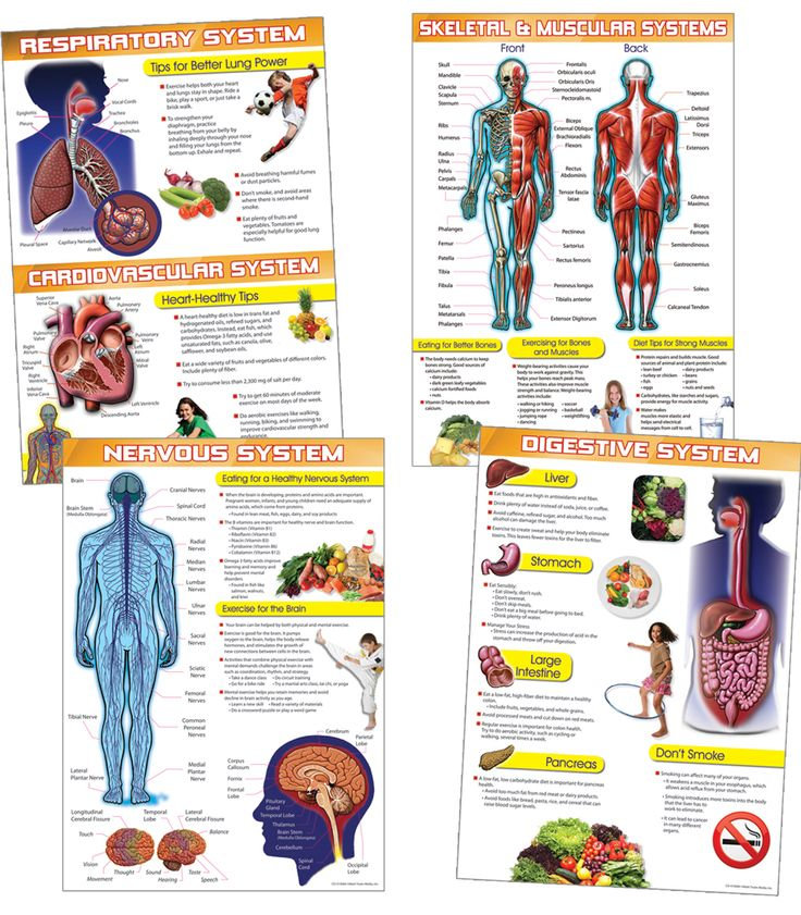 the human body and health tips bulletin board set consists of four charts with detailed diagrams. Black Bedroom Furniture Sets. Home Design Ideas