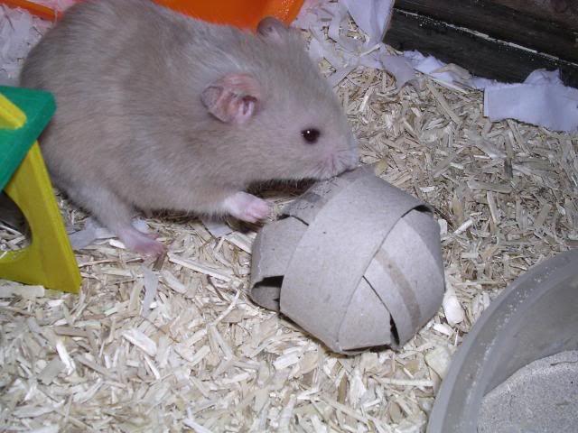 32 besten homemade hamster toys bilder auf pinterest
