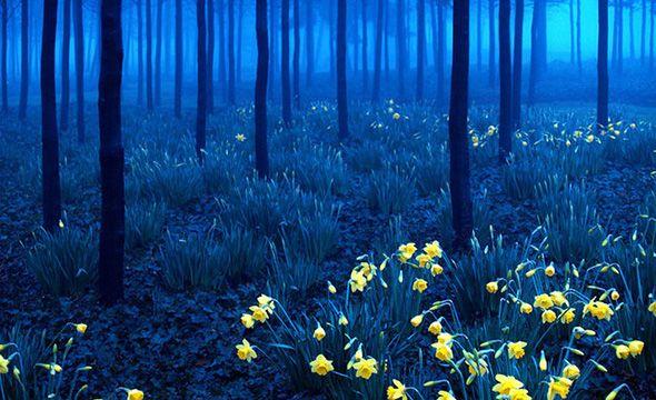 Μέλανας Δρυμός, Γερμανία
