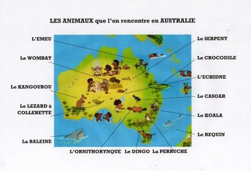 Découvre les animaux qui vivent en Australie et apprends à les reconnaître !