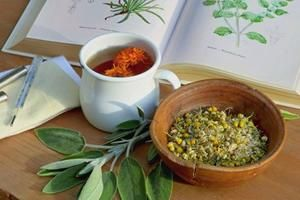 Когда сеять овощи на рассаду, натуральные средства от простуды, где зимуют вредители - ludmila_viktorovna@mail.ru - Почта Mail.Ru