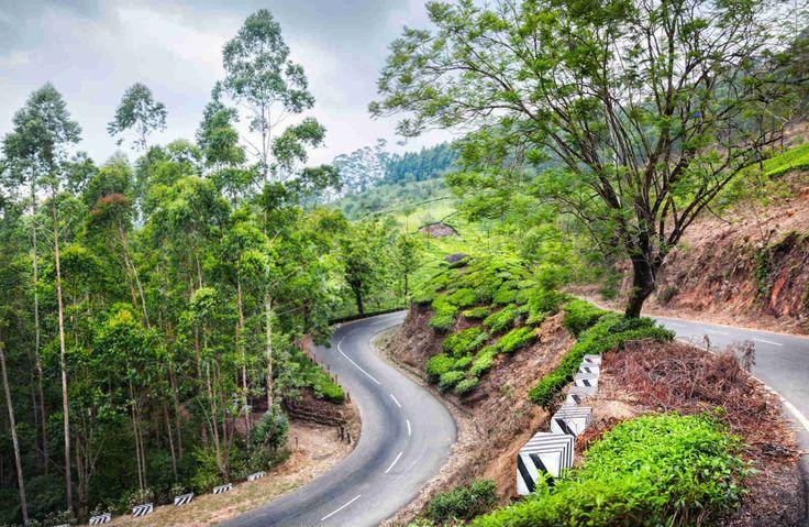 Road in Munnar with tea plantations ahead. Photo: 123Rf