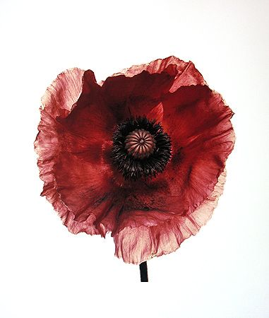 Irving Penn Poppy: Burgundy, New York, 1968