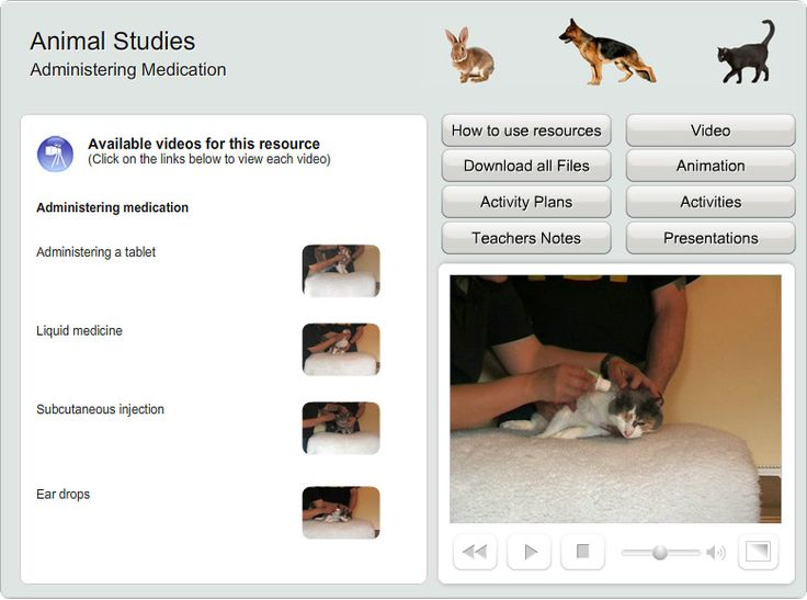 Animal Studies online course, with video and animation created for Coleg Sir Gar by Genieseye.
