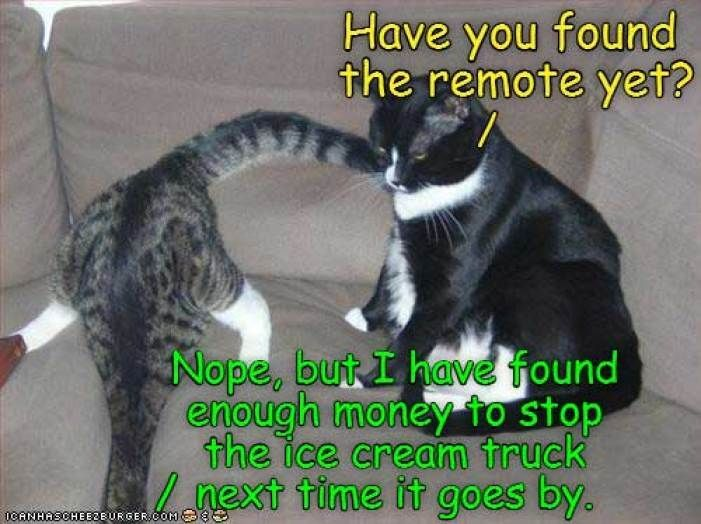 10 Funny Cat Memes To Have A Good Laugh Funny Cat Memes Funny