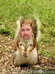 nicholas cage's face on animals - Google Search