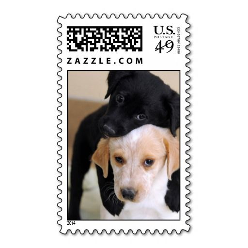 >>>Coupon Code          	Two Labrador Puppies Stamps Briefmarke           	Two Labrador Puppies Stamps Briefmarke today price drop and special promotion. Get The best buyHow to          	Two Labrador Puppies Stamps Briefmarke Review on the This website by click the button below...Cleck Hot Deals >>> http://www.zazzle.com/two_labrador_puppies_stamps_briefmarke-172878091913254513?rf=238627982471231924&zbar=1&tc=terrest