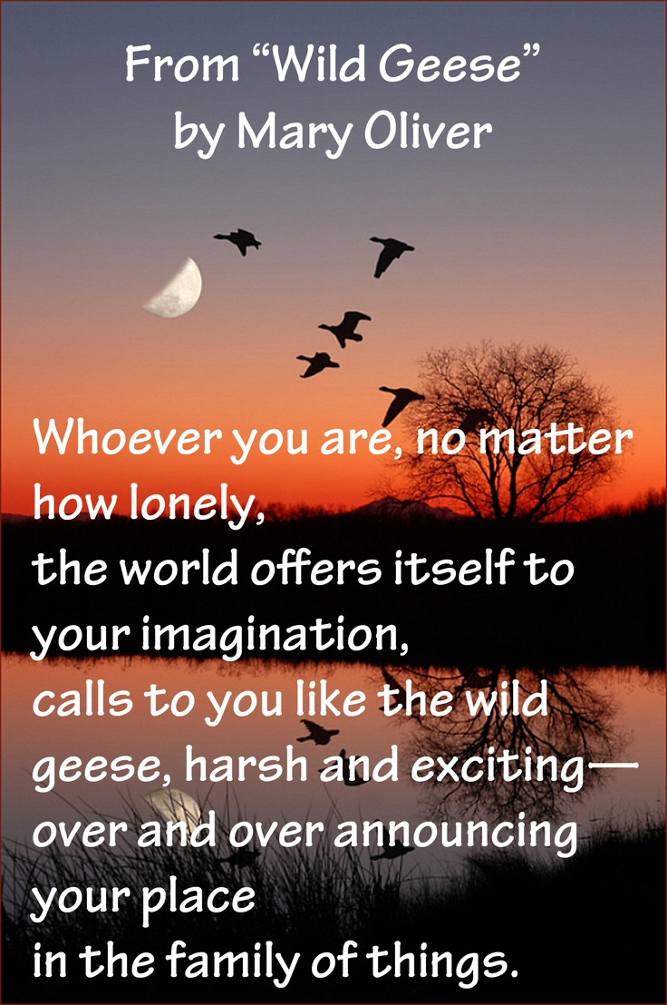 wild geese by mary oliver Here is a poem analysis of mary oliver's poem wild geese, which informs the  reader on how to live a worthwhile, good life throughout the poem, oliver.