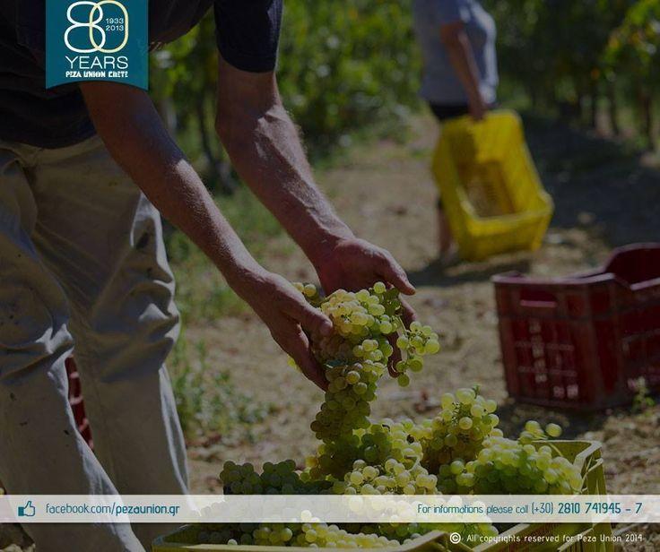 Harvest at Peza Union