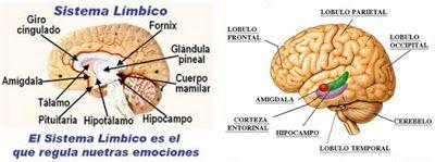 XanaNatura: Fibromialgia (FM)