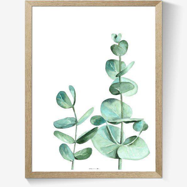 Plakat med eucalyptus gren