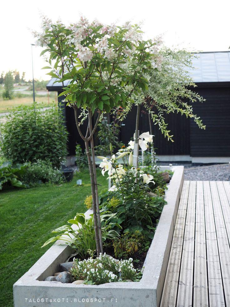 Betoniallas, istutuslaatikko, syyshortensia, puutarha