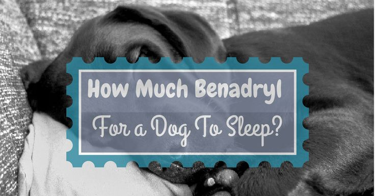Dog sedation how much benadryl is enough for a dog to