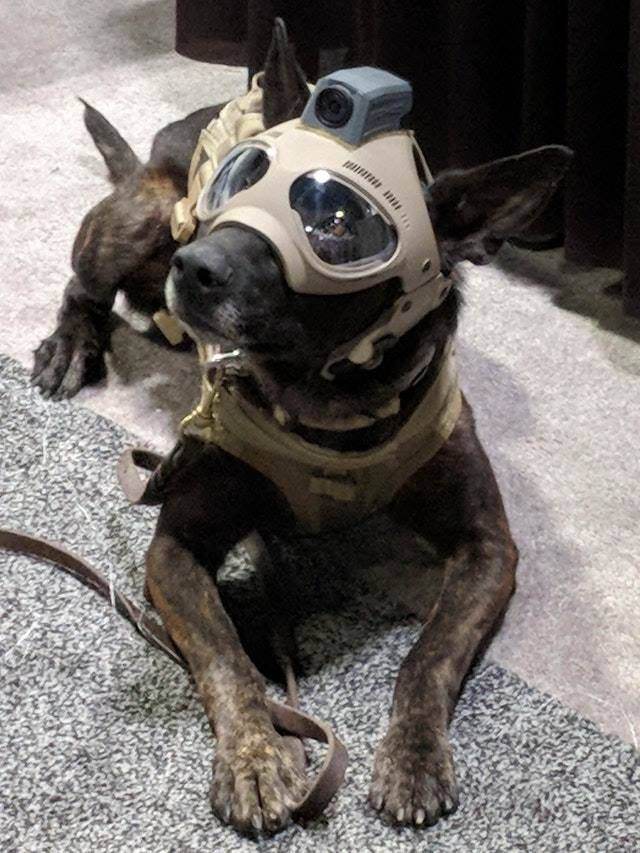 Dexter Needs One Of These Helmets For Crashing Through The Brush