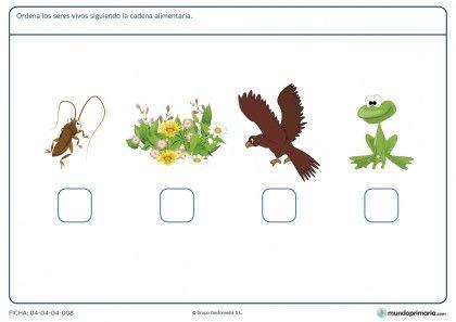 Ficha de la cadena alimenticia para primaria