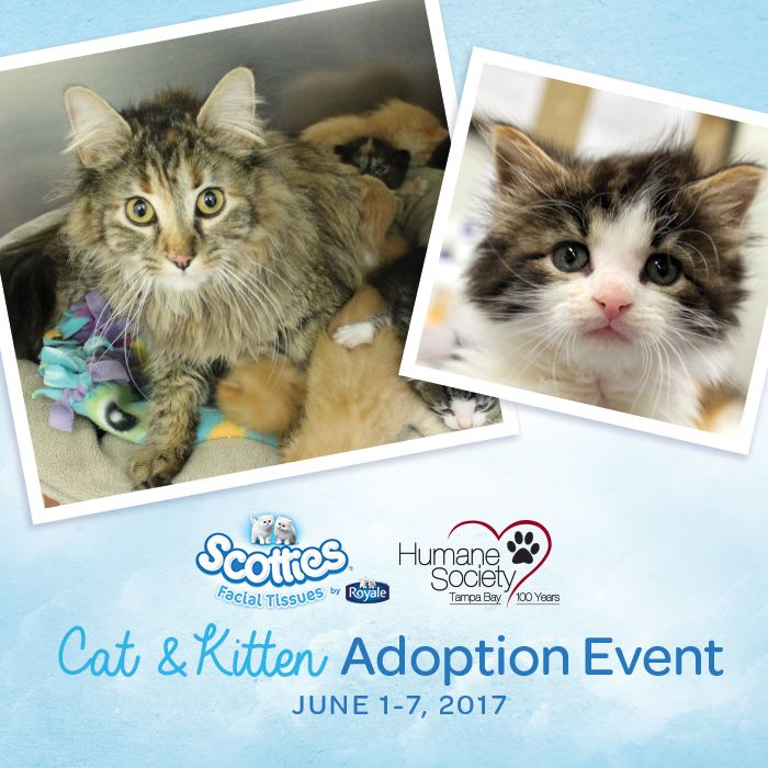 Humane Society of Tampa Bay Cat & Kitten Adoption Event {PLUS, an Amazon Gift Card GIVEAWAY}