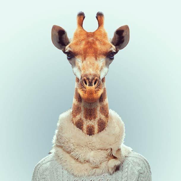 Zoo Portraits by Yago Partal - Giraffe