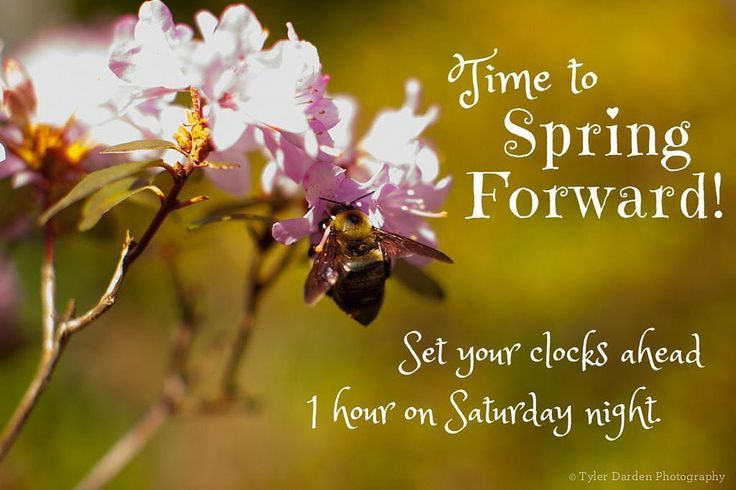 Daylight Savings Time is here... don't forget to set your clocks forward before you go to bed tonight! This is also a great time to test smoke alarms fire extinguishers and change your air filters! #changeyourclocks #daylightsavings #springfoward #testyoursmokealarms #testyourfireextinguisher #changeyourairfilters #safetyfirst