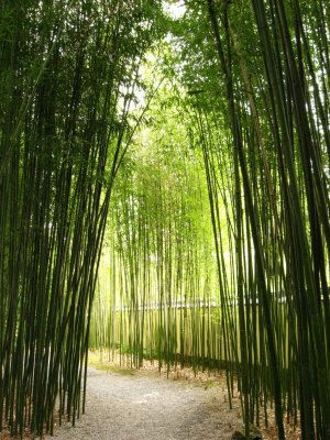 Bamboo garden screen.